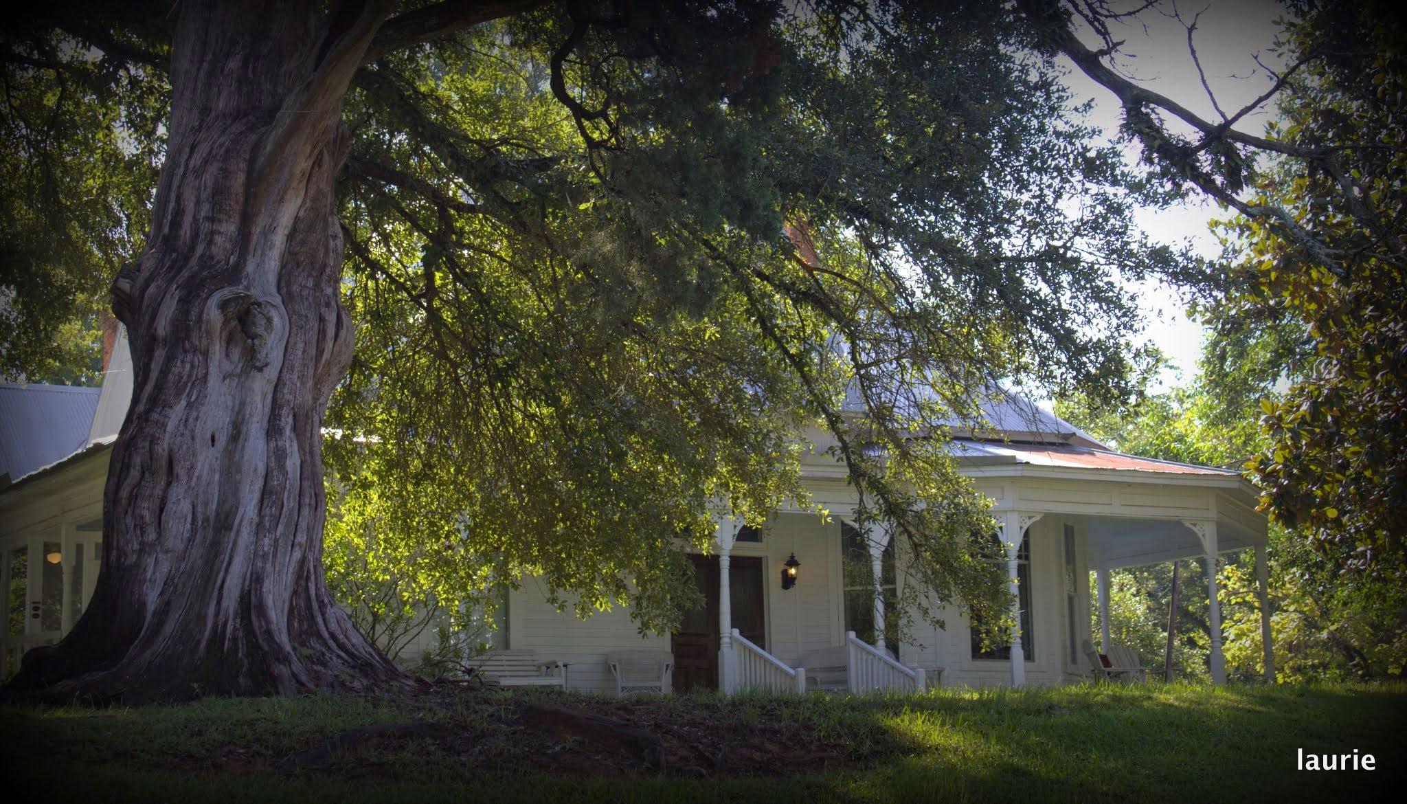 oak tree and house