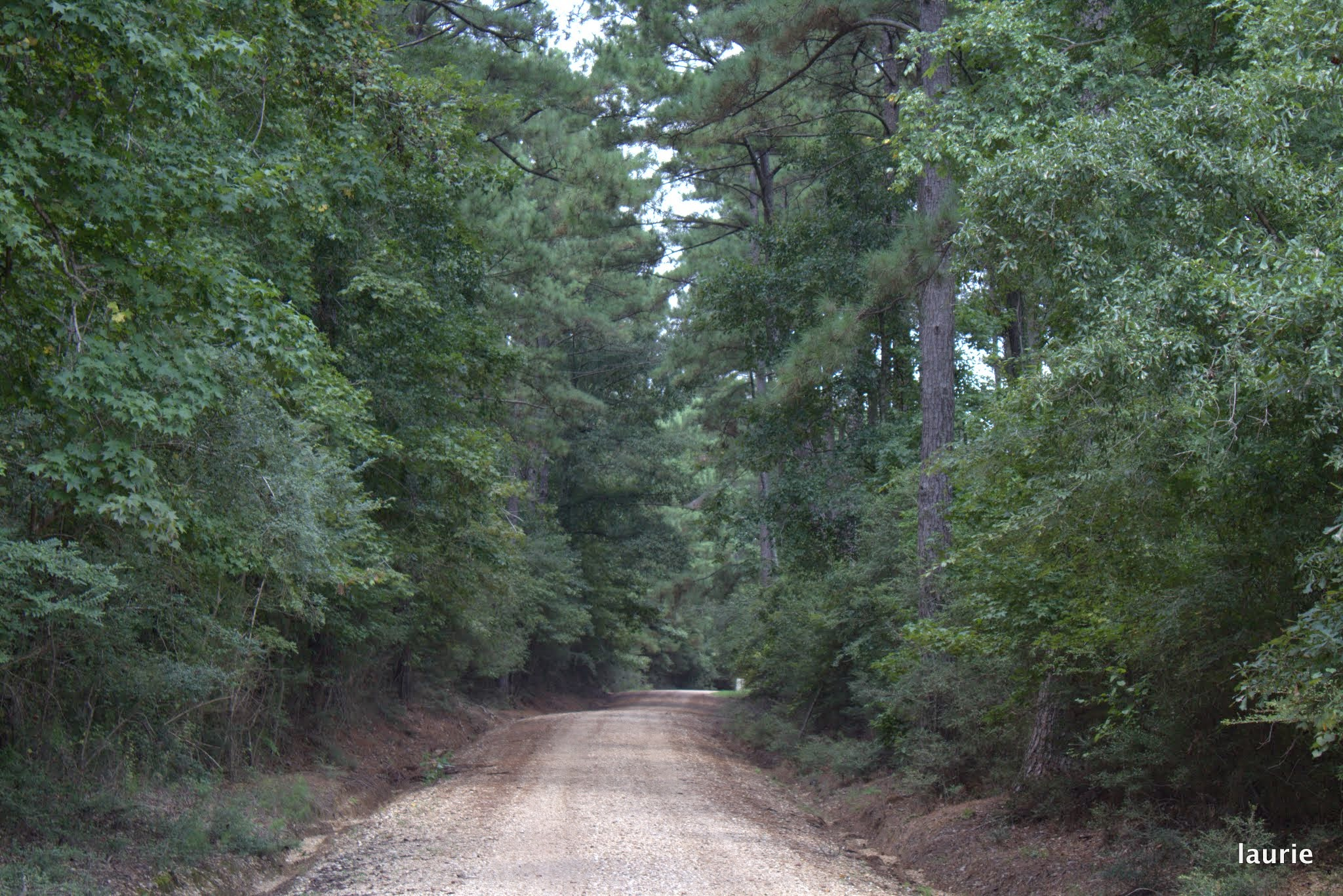dirt road to lodge