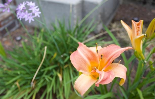 pale orange2